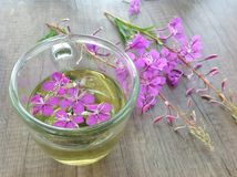 Willow herb Ivan tea in cup at the wood table workplace. As background royalty free stock photography