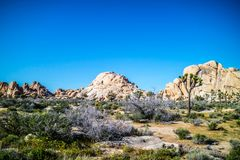 Willow Hole Rocks in Joshua Tree National Park, Californië stock fotografie