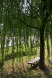 willow krzesła. zdjęcie stock