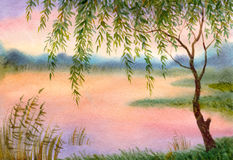 Willow by the lake. Watercolor landscape. Young willow branches bent over the evening pond Stock Image