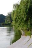 Willow lake Royalty Free Stock Image