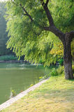 Willow lake royalty free stock photography