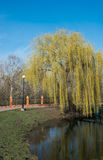 Willow on the lake Royalty Free Stock Photos