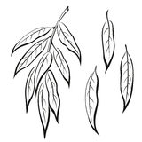 Willow Leaves, Pictogram Set. Set of Plant Pictograms, Willow Tree Leaves, Black on White. Vector Royalty Free Stock Photo