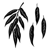 Willow Leaves, Pictogram Set. Set of Plant Pictograms, Willow Tree Leaves, Black on White. Vector Stock Photos
