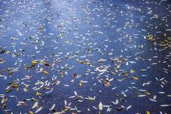 Willow leaves of wet asphalt Stock Photography