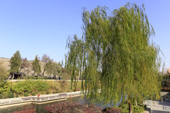 Willow by the moat of the ancient xian city Royalty Free Stock Images
