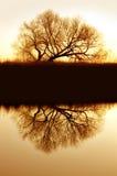 willow nadbrzeżnymi odbicia Zdjęcie Royalty Free