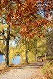 willow oaks dnia jesieni Fotografia Stock