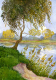 Willow over the river. Watercolor landscape. Young willow shakes the branches over the quiet river Stock Image