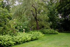 Willow Park. Manicured park with a graceful weeping willow stock image