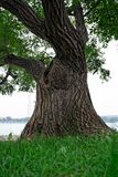 willow pary zdjęcie royalty free