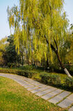 Willow by flagstone path Royalty Free Stock Image