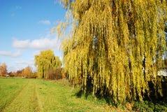 willow potoki łez Zdjęcia Stock