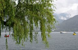 Willow in the rain, on the Zeller Lake,Austria Royalty Free Stock Images