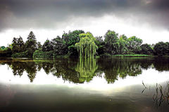 Willow Reflections - la Norfolk R-U Photographie stock
