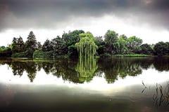 Willow Reflections - Norfolk UK Arkivbild