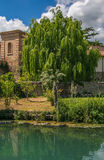 Willow on the river Clitunno in Umbria. Italy royalty free stock images