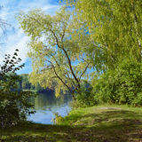 Willow on the river in early autumn Royalty Free Stock Image