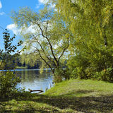 Willow on the river in early autumn Stock Photo