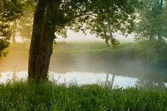 Willow at the river in morning Stock Photography