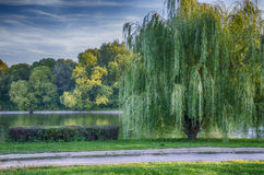 Willow. By the river next to the road Stock Photography