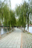 Willow Road. Willow Lake Road, China Willow Lake Road, China royalty free stock image