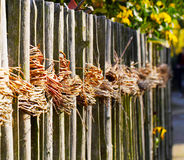 Willow rods at the garden fence Stock Photo