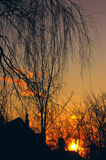 Willow and Rooftops at Sunset. The sun sets behind the home of a massive weeping willow tree Royalty Free Stock Photos