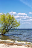 Willow on the shore of the water reservoir Stock Image