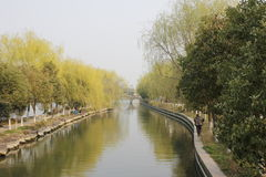 Willow strenghth the branch with leaves on the river(Jiaxing,China) Royalty Free Stock Images