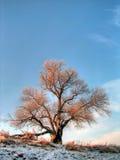 willow tło potoki łez Fotografia Stock