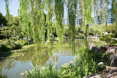 Willow Tendrils que llora: Jardín chino de la amistad foto de archivo