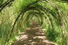 Willow Tree Arches. Imagen de archivo libre de regalías