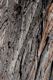 Willow Tree Bark Background. A close-up of an willow tree's bark stock photo