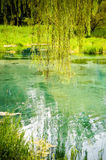 Willow tree and blue lake Stock Image