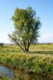 Willow tree and drainage channel Royalty Free Stock Photo