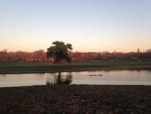 Willow Tree e patos em uma lagoa durante o por do sol no inverno Fotos de Stock