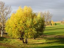 Willow tree at Flowing Springs. Late fall willow tree at Flowing Springs Royalty Free Stock Image
