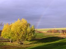 Willow tree at Flowing Springs and rainbow. Late fall willow tree at Flowing Springs after rain with rainbow with beautiful lighting Stock Images