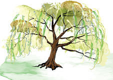 Willow tree on the ground landscape design,watercolor look created with brush Royalty Free Stock Photos