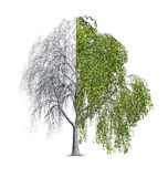 Willow Tree Half Bare Stock Image