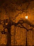 Willow tree illuminated at night by a lantern at Kalemegdan park in Belgrade Stock Photos