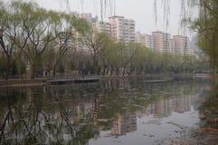 Willow Tree im Vorfrühling in Peking stockbilder