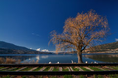 Willow Tree on the Lake. Willow tree on Wood Lake with train tracks in the foreground Royalty Free Stock Image
