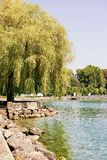 Willow tree at Lake Geneva embankment summer Ouchy village Lausanne. Lausanne, Switzerland - August 26, 2018: Willow tree at Lake Geneva embankment in Ouchy stock photography