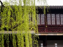 Willow tree in Lion Grove garden in springtime - Suzhou, China. Suzhou, China - March 23, 2016: Springtime in Lion Grove Garden, a classical Chinese garden and stock images