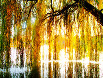Willow tree over a lake. Weeping willow tree in fall over a lake royalty free stock photos