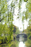 Willow Tree overhanging the water, Suzhou, China Royalty Free Stock Photography