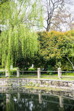 Willow tree in park Stock Photography